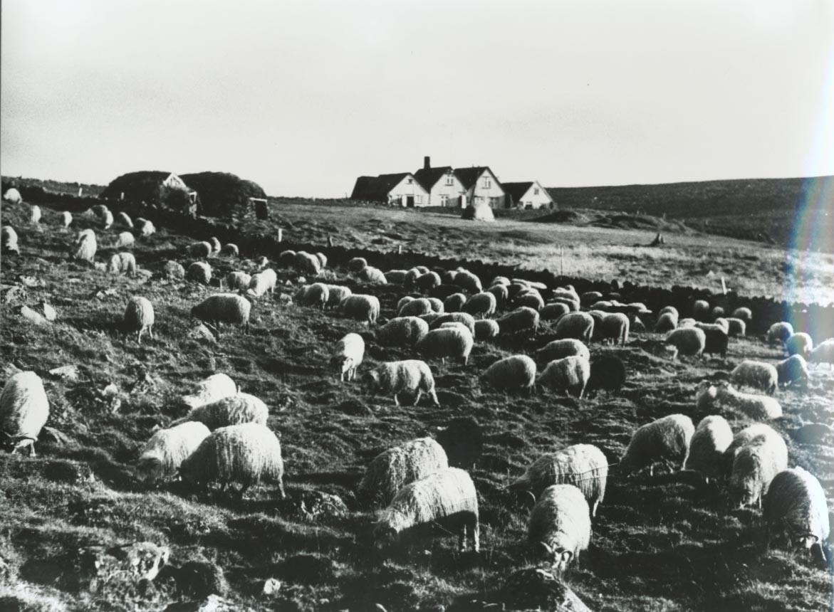 Árbær 1950 / Árbær farm 1950