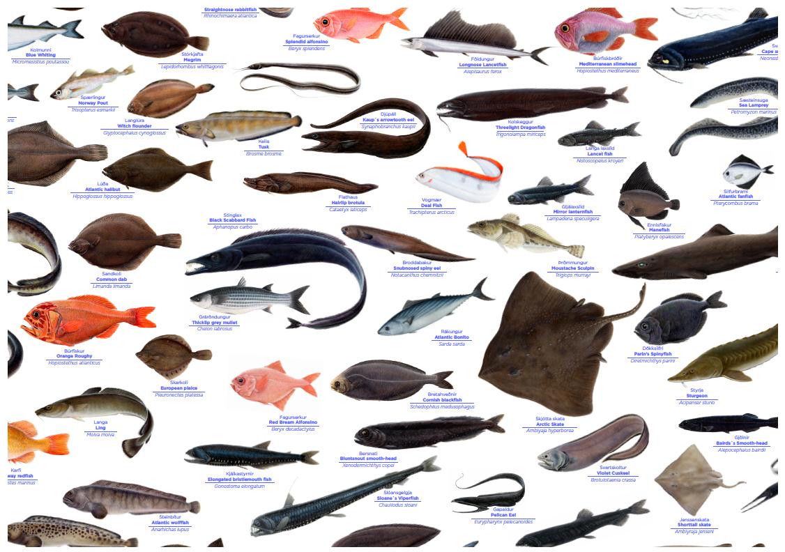 Útlit og heiti fjölmargra fiska